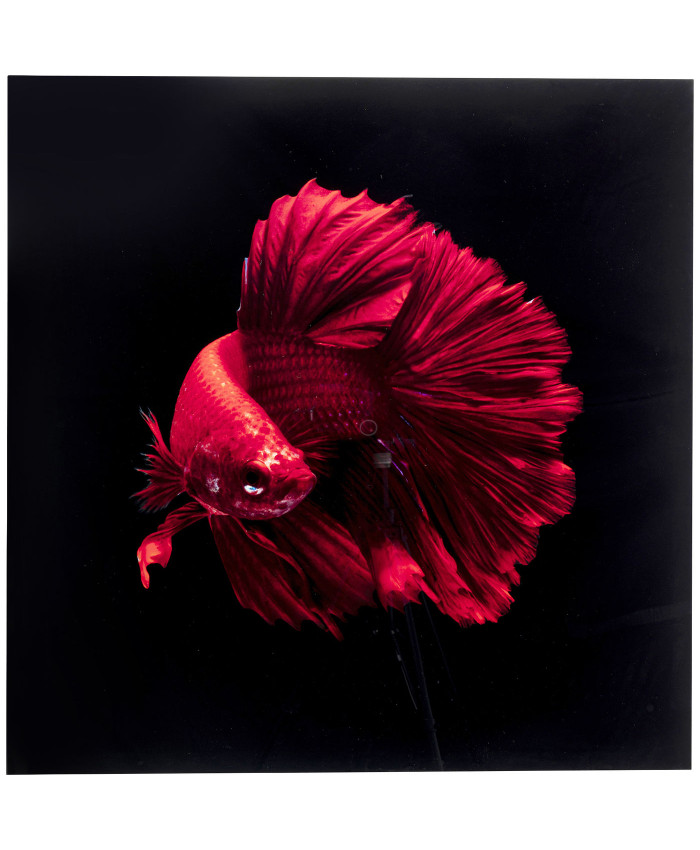 Glass Picture Fire Fish 100x100